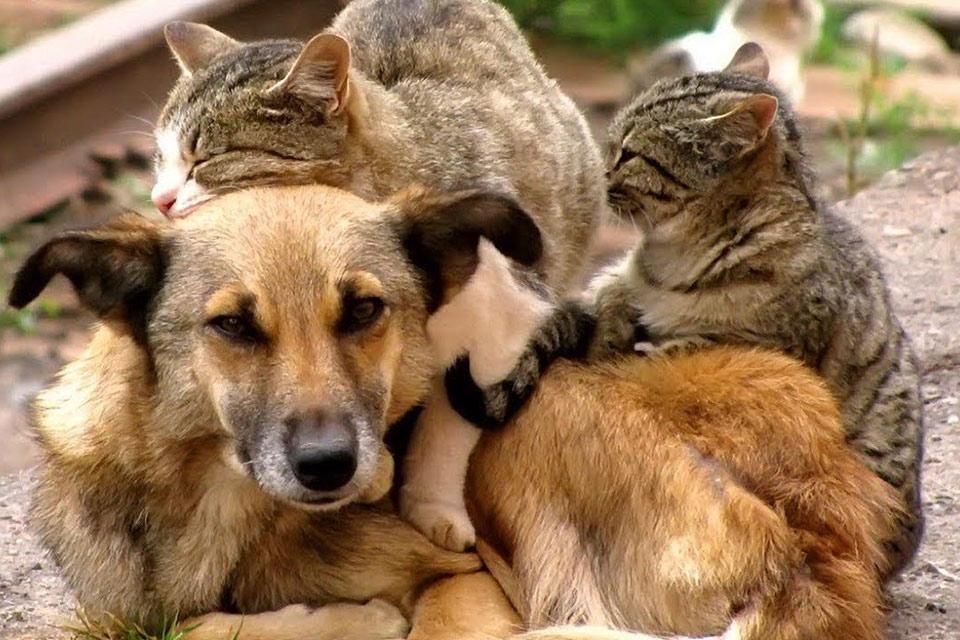 პიკის საათი გირჩევთ... - როგორ დავეხმაროთ მიუსაფარ, თუ ექსტრემალურ ვითარებაში ჩავარდნილ ცხოველს?
