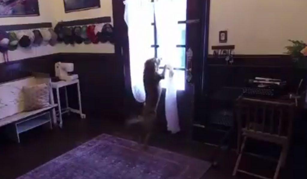 როგორ შეხვდა კოსმოსიდან სახლში დაბრუნებულ ნასას ასტრონავტს საკუთარი ძაღლი [ვიდეო]