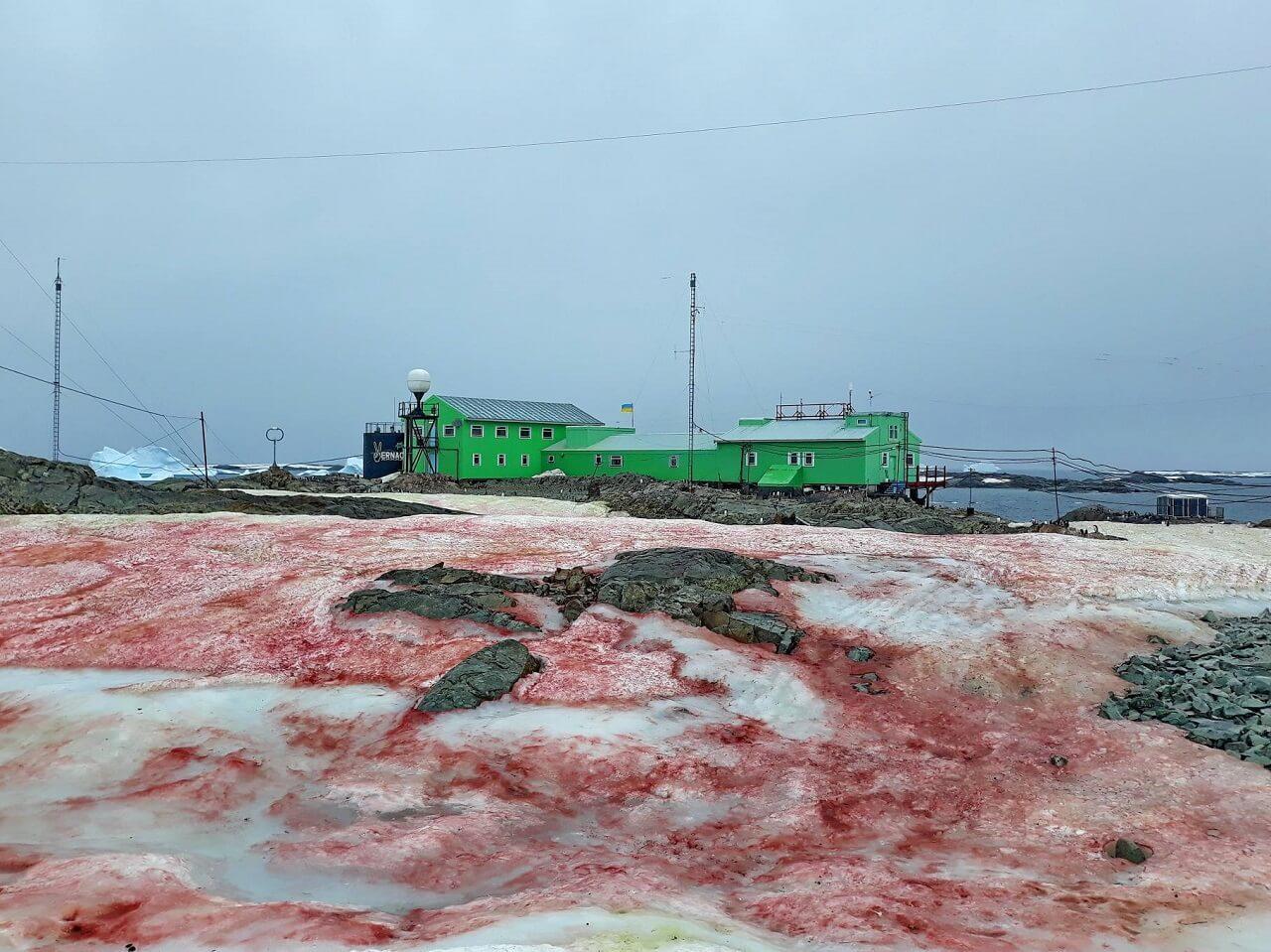 ანტარქტიდაზე სისხლისფერი თოვლი და ყინული დააფიქსირეს — მიზეზი საკმაოდ სახიფათოა