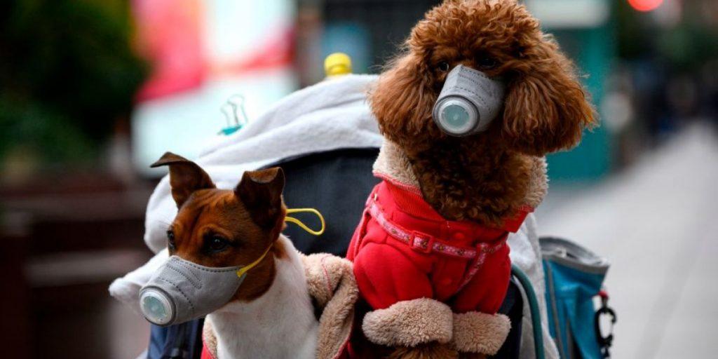ჰონგ კონგში კორონავირუსი ძაღლს დაუდგინდა