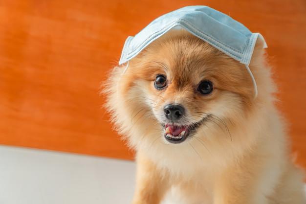 ჰონგ-კონგი ადასტურებს, რომ ძაღლს ახალი კორონავირუსი დაუდგინდა — გადადება, სავარაუდოდ, ადამიანისგან მოხდა