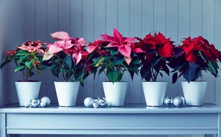"""პიკის საათი -""""ეკოპიკი""""- ყვავილები ჩვენს ირგვლივ"""