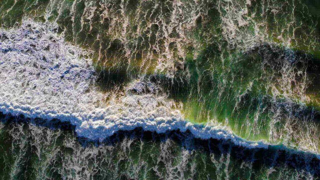 ოკეანის ბინადარი არსებები მილიონობით ვირუსისგან გვიცავენ — ახალი კვლევა