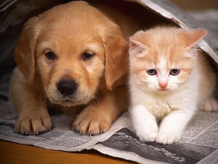შენჯენი ჩინეთის პირველი ქალაქია, სადაც კატებისა და ძაღლების საკვებად გამოყენება აკრძალეს