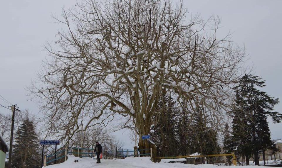 გურიის მაღალმთიანეთში მოთოვა