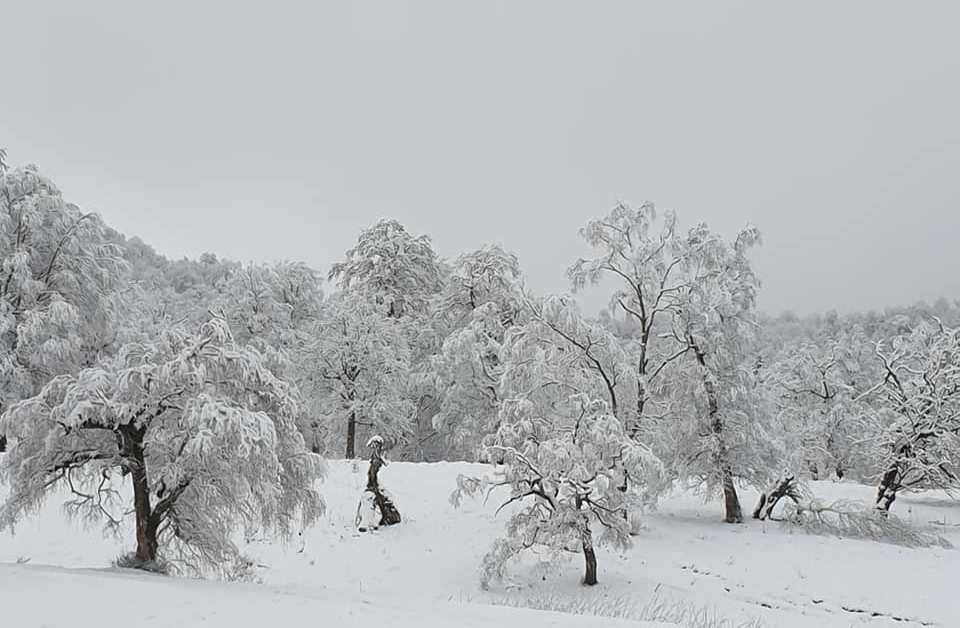 Майский снег в Бакуриани (фото)