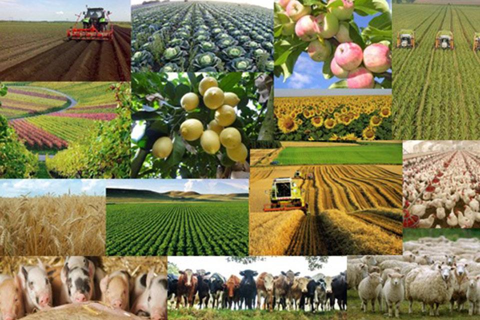 ბიზნესპარტნიორი - სოფლის მეურნეობის ანტიკრიზისული გეგმა და მთავარი გზავნილები ფერმერებს