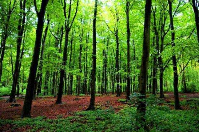 """პიკის საათი - """"ეკოპიკი""""- ახალი სატყეო კოდექსი ტყეების შესანარჩუნებლად"""