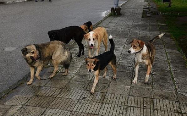 პიკის საათი - მიუსაფარი ცხოველები პანდემიის პირობებში