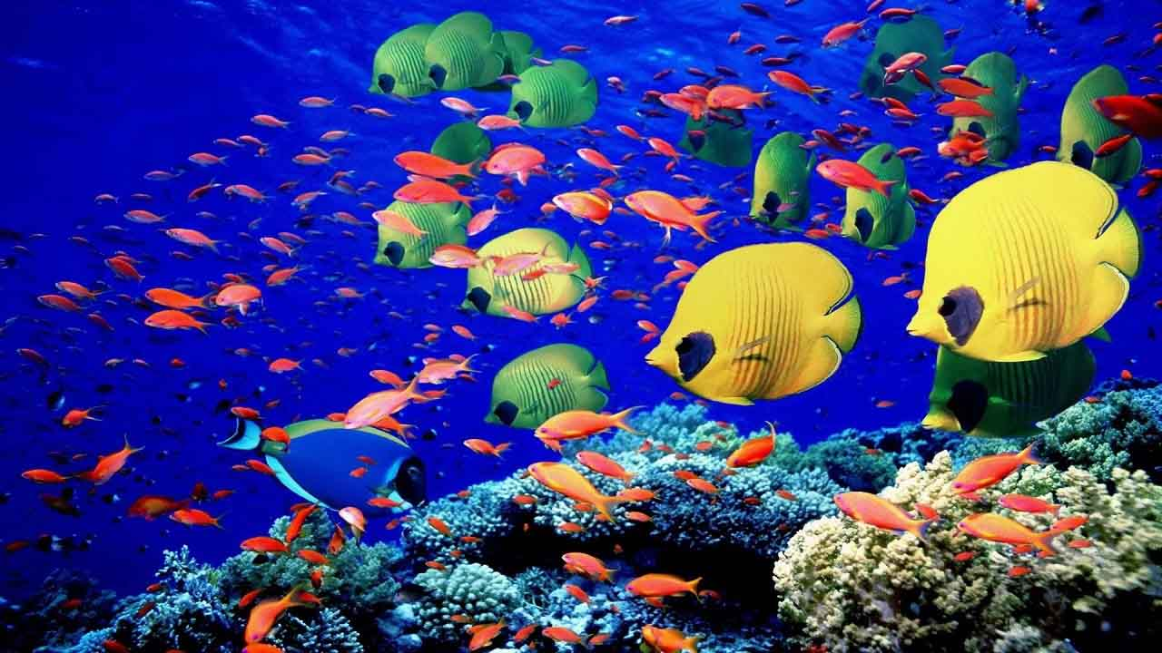 გლობალური დათბობის გამო, ცხოველთა ათასობით სახეობა მასობრივად გარბის დედამიწის პოლუსებისკენ