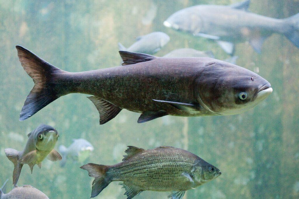 როგორ ახდენენ თევზები შორეული, იზოლირებული ტბების კოლონიზებას — #1TVმეცნიერება