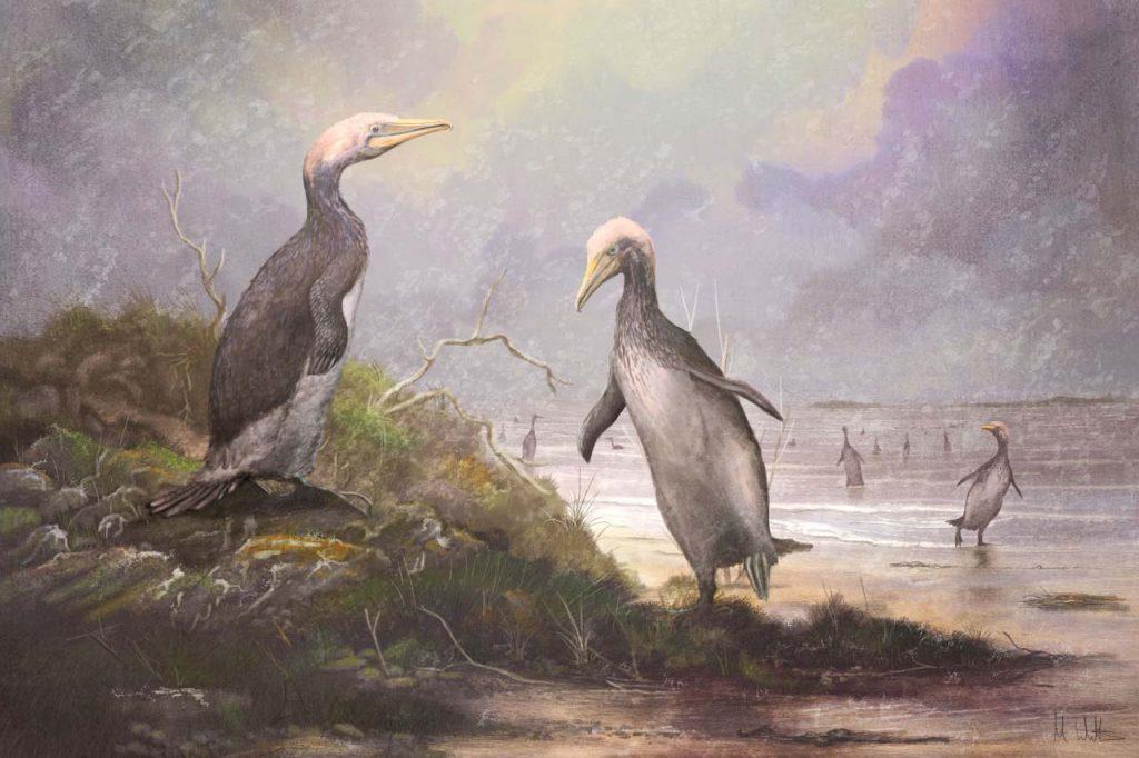 გიგანტური პინგვინის მსგავსი ფრინველები ერთ დროს ჩრდილოეთ ნახევარსფეროშიც დაბაჯბაჯებდნენ — #1TVმეცნიერება
