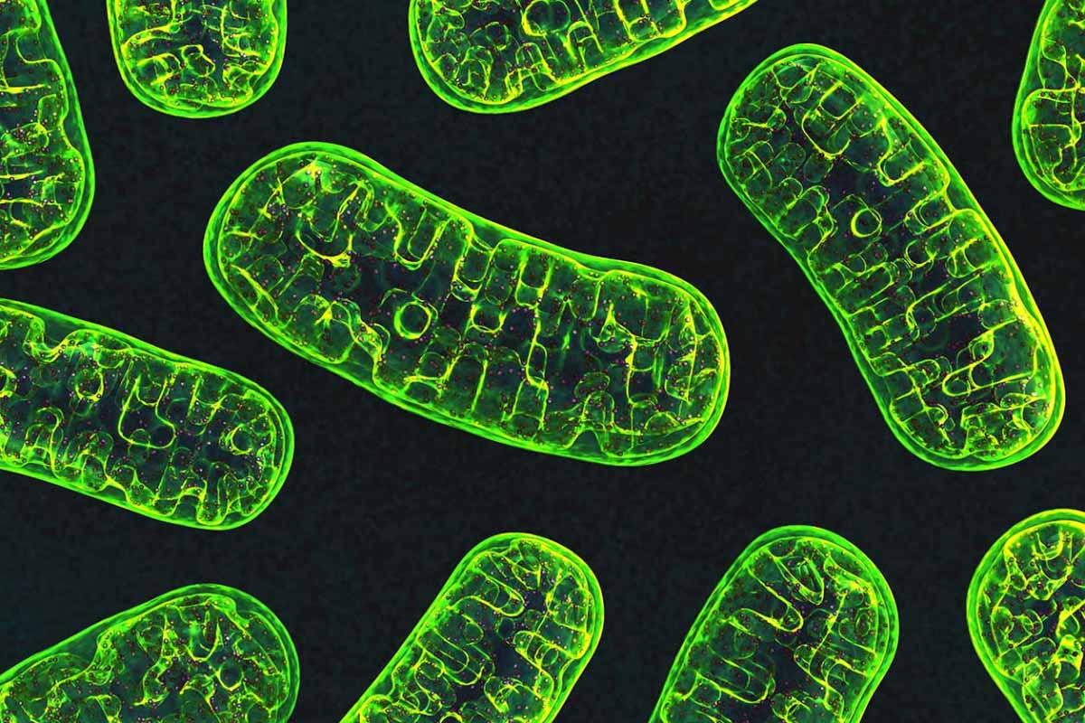 მეცნიერებმა მიტოქონდრიული დნმ-ის მიზნობრივი რედაქტირების გზას მიაგნეს — პირველად ისტორიაში #1TVმეცნიერება