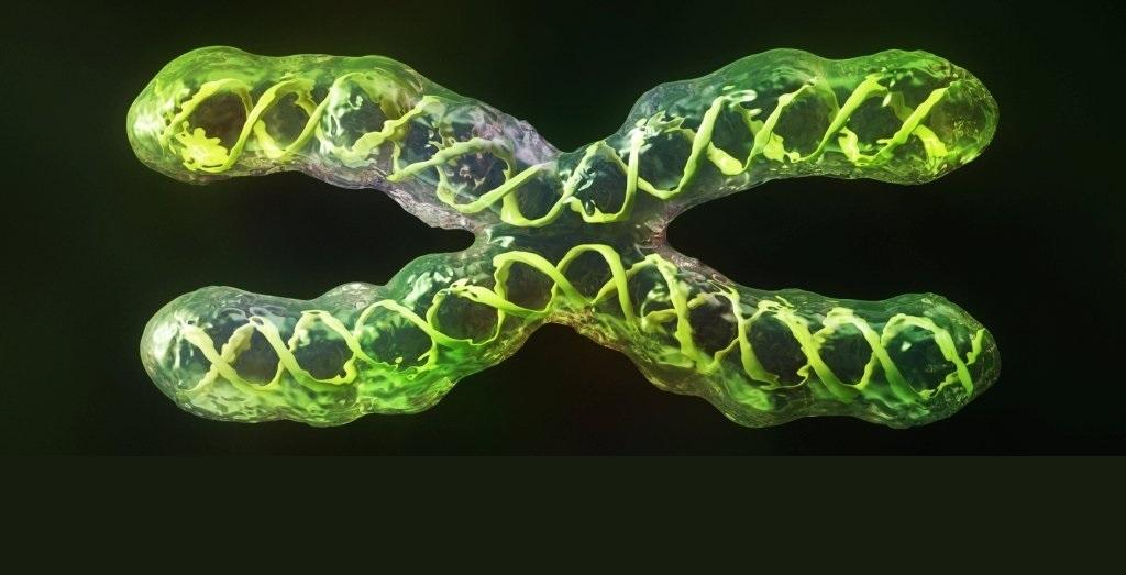 პირველად ისტორიაში, მეცნიერებმა ადამიანის ქრომოსომის სრული კომპლექტი მიიღეს — #1TVმეცნიერება