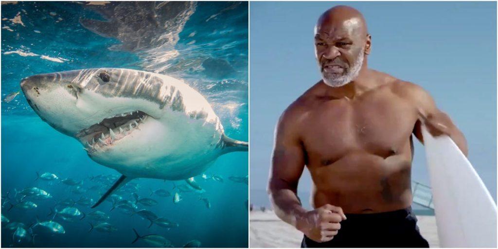 ტაისონი სატელევიზიო შოუს ფარგლებში ზვიგენს შეებრძოლება (ვიდეო)