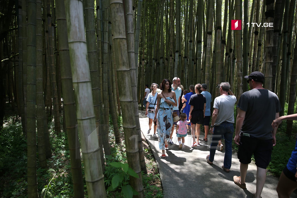 Shekvetili Dendrological Park has been visited by more than 100,000 guests in four days