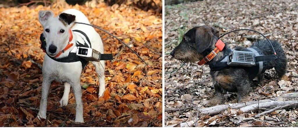 ძაღლები ნავიგაციისთვის დედამიწის მაგნიტურ ველს იყენებენ — ახალი კვლევა #1tvმეცნიერება