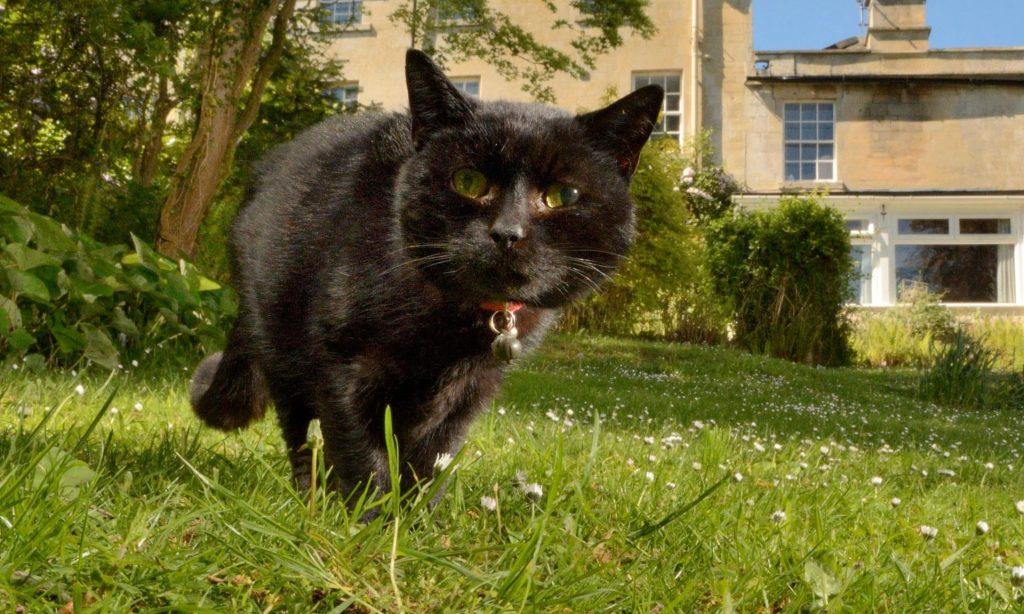 გაერთიანებულ სამეფოში ცხოველის კორონავირუსით ინფიცირების პირველი შემთხვევა დაფიქსირდა
