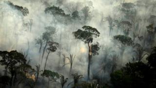 მედიის ინფორმაციით, ამაზონის ტყეებში ხანძრის აქტიური კერების რაოდენობა გაიზარდა