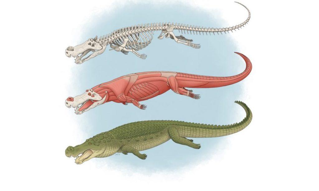 ამ გიგანტურ ნიანგს ბანანის ზომის კბილები ჰქონდა და დინოზავრებზე ნადირობდა — ახალი კვლევა #1tvმეცნიერება