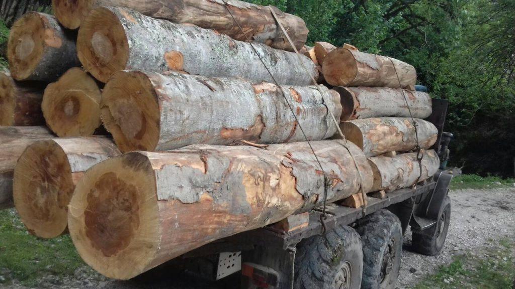 აგვისტოში ხე-ტყის უკანონო მოპოვებისა და ტრანსპორტირების 207 ფაქტი გამოვლინდა