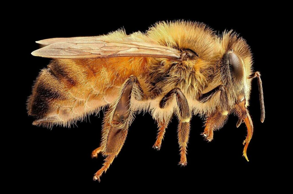 ფუტკრის შხამში შემავალმა მოლეკულამ ლაბორატორიაში ძუძუს კიბოს უჯრედები გაანადგურა — #1tvმეცნიერება
