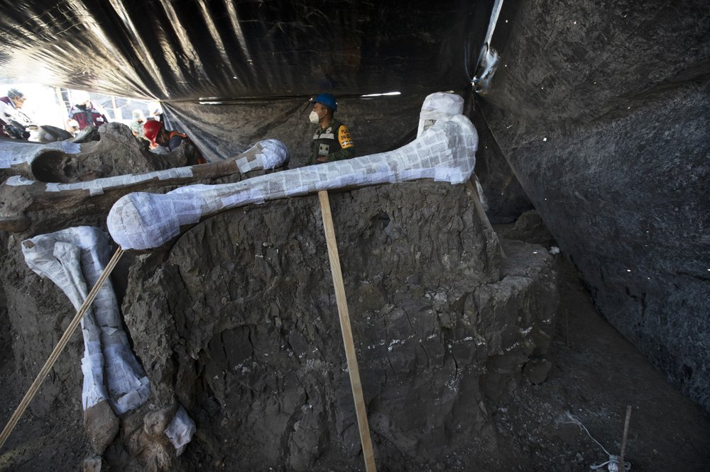 მექსიკაში აეროპორტის მშენებლობისას ასობით მამონტის ჩონჩხი აღმოაჩინეს — #1tvმეცნიერება
