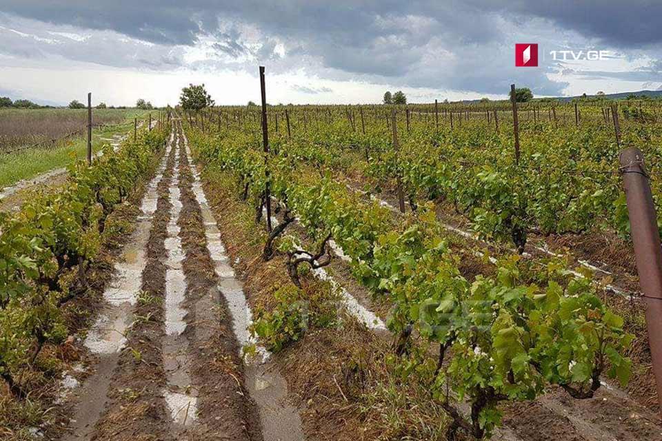ახმეტაში, სეტყვისგან დაზარალებული სოფლების მოსახლეობა ყურძნის ჩაბარებას მუნიციპალიტეტის ღვინის ქარხანაში ხვალ დილიდან შეძლებს