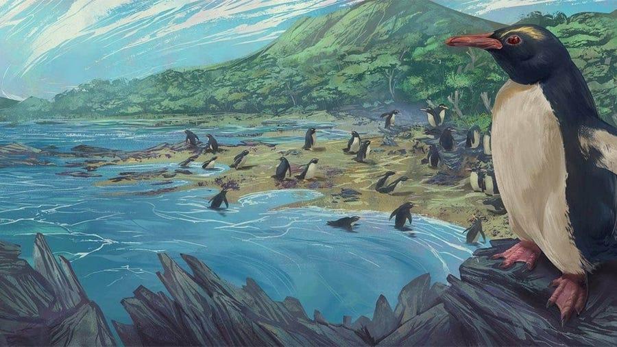 პინგვინის ყველა სახეობის წინაპარი დედამიწის დაკარგულ კონტინენტ ზელანდიაზე ბინადრობდა — ახალი კვლევა #1tvმეცნიერება