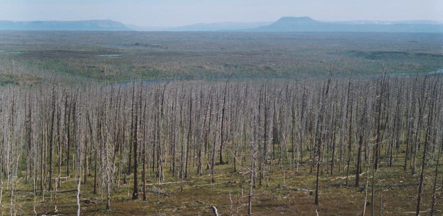 არქტიკული ტყეების შემცირების ფენომენი რუსეთის ყველაზე დაბინძურებულ ქალაქთან აღმოჩნდა დაკავშირებული — #1tvმეცნიერება