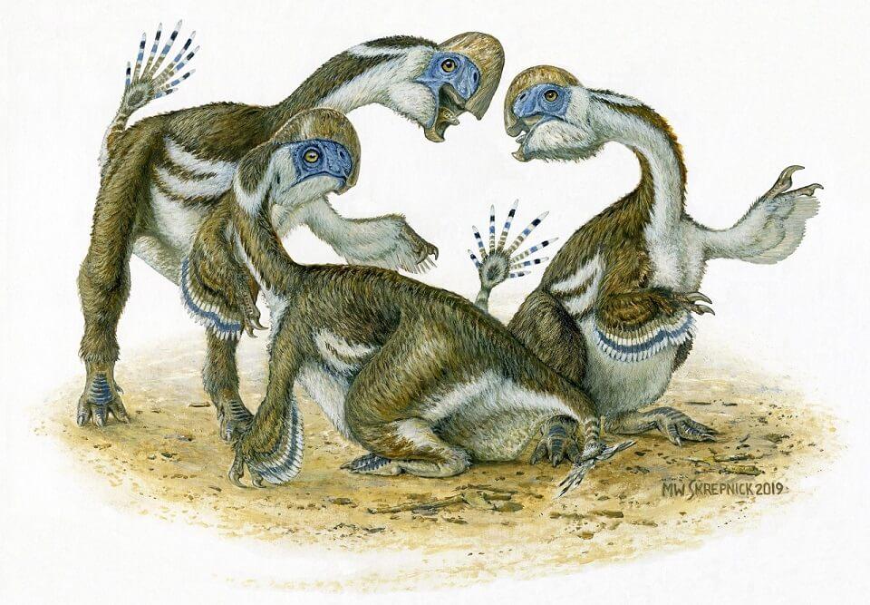 აღმოჩენილია თუთიყუშის მსგავსი, უკბილო დინოზავრები, რომლებიც 70 მლნ წლის წინ ბინადრობდნენ — #1tvმეცნიერება