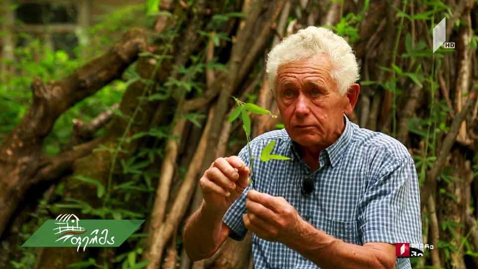 #ფერმა როგორ მოიყვანა 82 წლის ფერმერმა ლაგოდეხში ბატატი