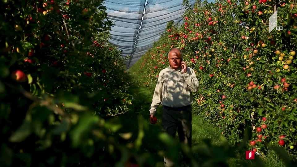 #ფერმა გორის რაიონში ხეხილის უდიდესი ბაღების გაშენების ისტორია