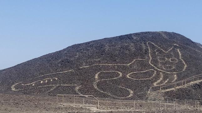 ნასკას უდაბნოში კატის გიგანტური, 2000 წლის წინანდელი გამოსახულება აღმოაჩინეს — #1tvმეცნიერება