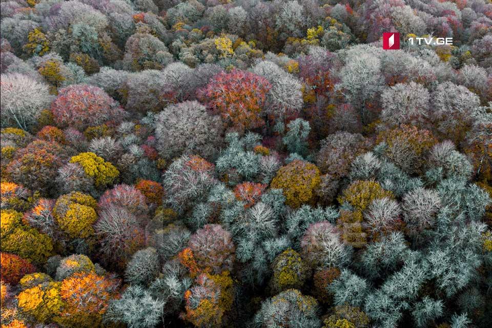შემოდგომა საბადურის ტყეში [ფოტო]