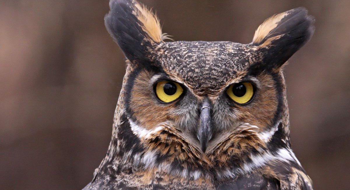 ბუს თვალების დნმ-ის განსაკუთრებული ტიპი შესაძლოა, ღამით ხედვის ლინზის როლს ასრულებს — #1tvმეცნიერება
