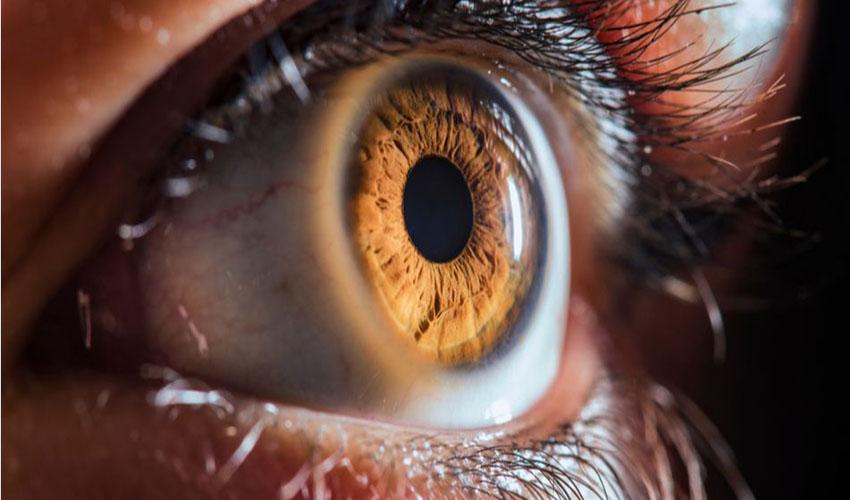 ადამიანის თვალის ერთმა ქსოვილმა SARS-CoV-2-ისადმი რეზისტენტულობა აჩვენა — #1tvმეცნიერება