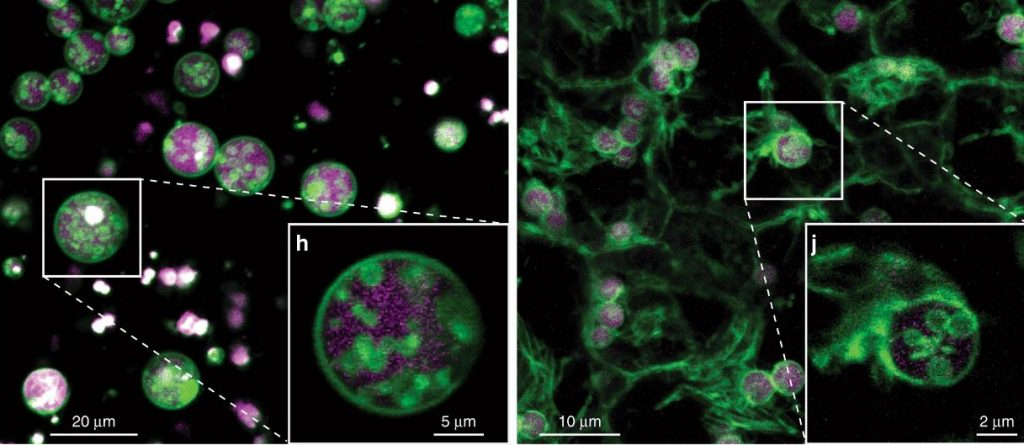 მცენარის უჯრედებში მეცნიერებმა მოულოდნელი სტრუქტურა აღმოაჩინეს — #1tvმეცნიერება