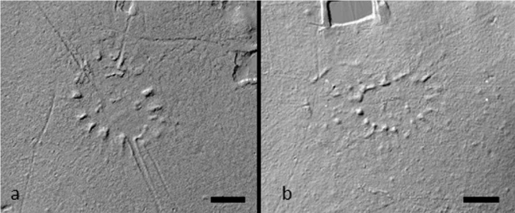 ამაზონის ტყეებში საათის ფორმის უძველეს ნასოფლართა დამალული ქსელი აღმოაჩინეს — #1tvმეცნიერება