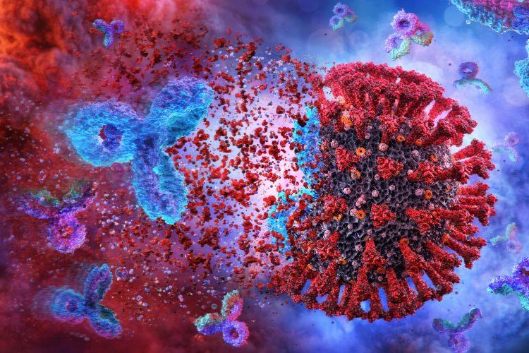 დიდებული ამბავი — ახალი კვლევა აჩვენებს, რომ COVID-19-ისადმი იმუნიტეტი სულ მცირე რვა თვეს ძლებს #1tvმეცნიერება