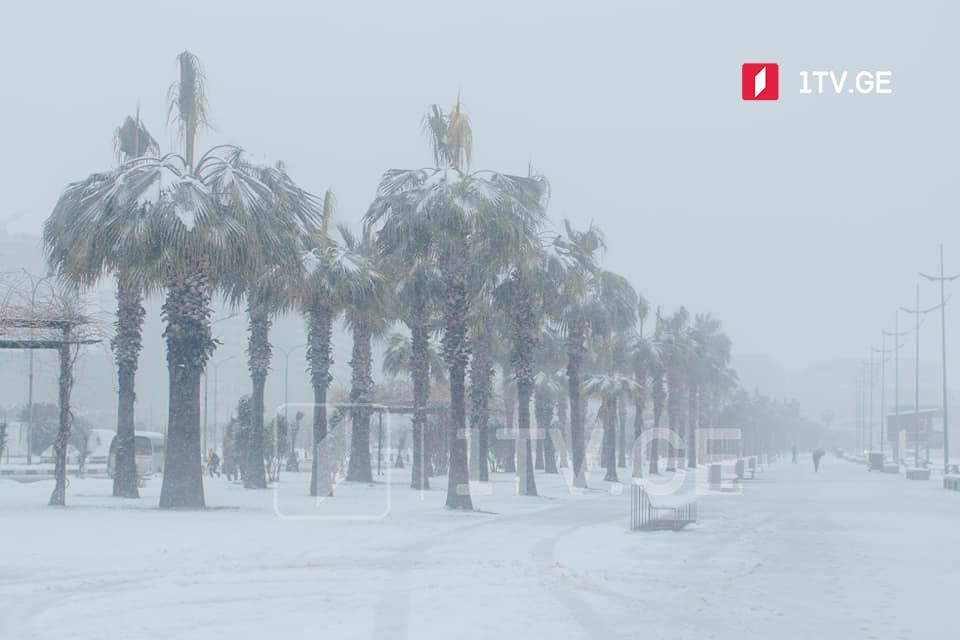 Snowy Batumi (Photo)