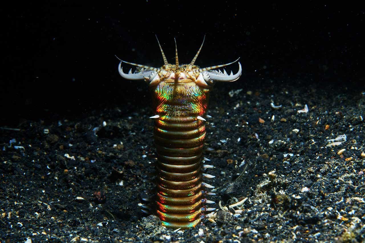 აღმოჩენილია ზღვის ფსკერის ბინადარი უძველესი, უზარმაზარი მტაცებელი ჭიაყელების სოროები — #1tvმეცნიერება