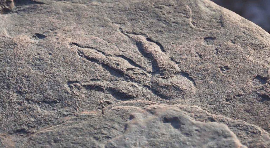 ოთხი წლის გოგონამ 220 მლნ წლის წინანდელი დინოზავრის ნაფეხური აღმოაჩინა — #1tvმეცნიერება