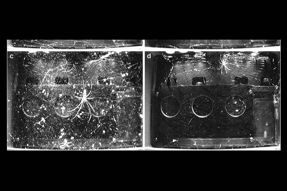 პიკის საათი - ობობები კოსმოსში