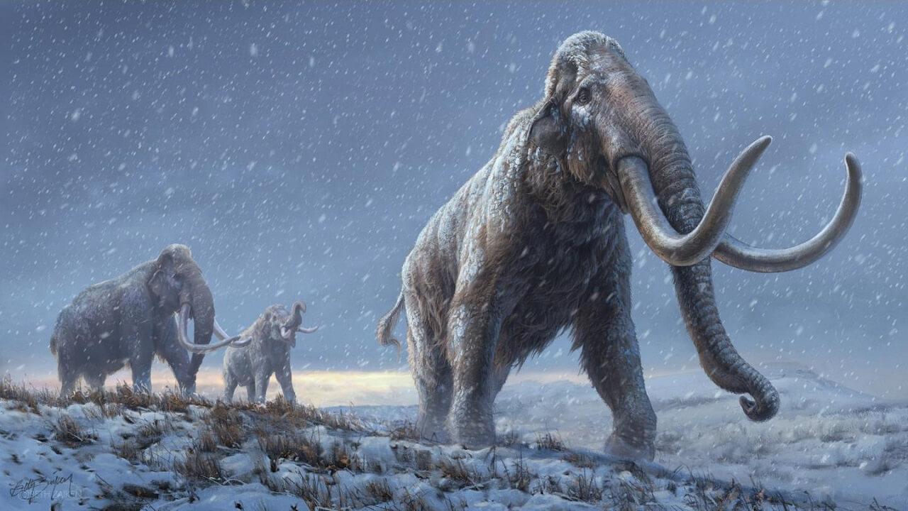 მეცნიერებმა მილიონი წლის წინანდელი მამონტის დნმ გაშიფრეს — #1tvმეცნიერება