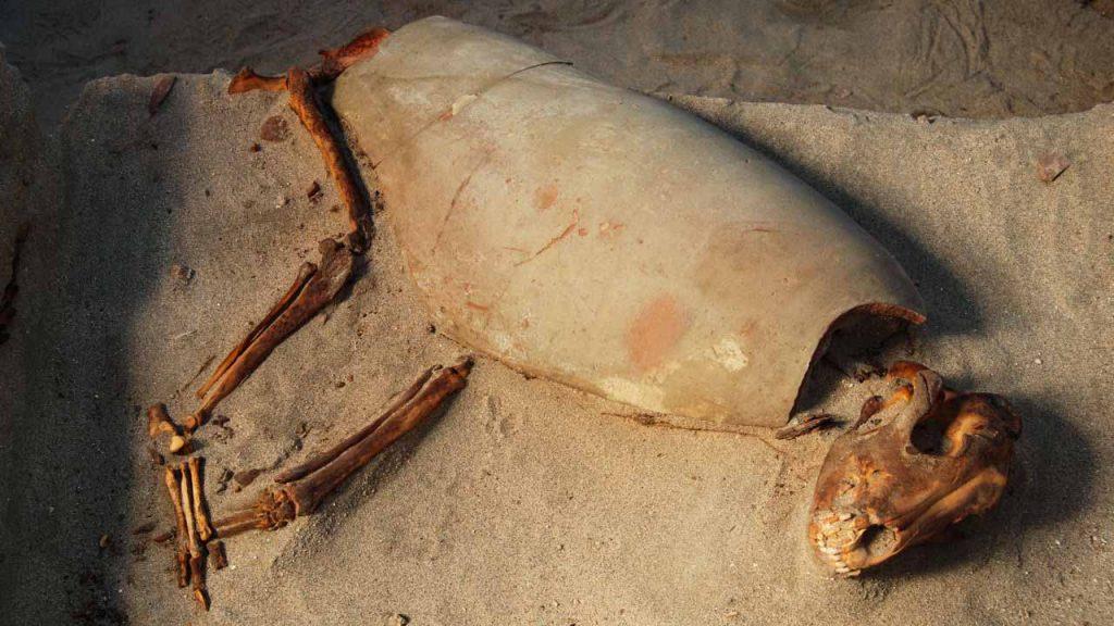 შინაურ ცხოველთა უძველესი სასაფლაო — წითელ ზღვასთან 600 კატისა და ძაღლის ძველეგვიპტური სამარხები აღმოაჩინეს #1tvმეცნიერება