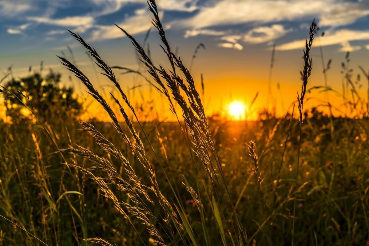 2100 წლისთვის ჩრდილოეთ ნახევარსფეროში ზაფხულის ხანგრძლივობა შეიძლება ნახევარ წლამდე გაიზარდოს — #1tvმეცნიერება