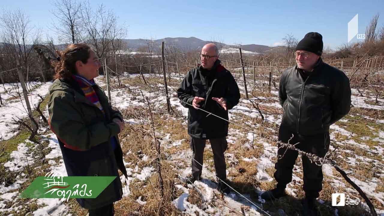 როგორ იმკვიდრებს თავს ბოლნური ღვინო ქართულ მეღვინეობაში