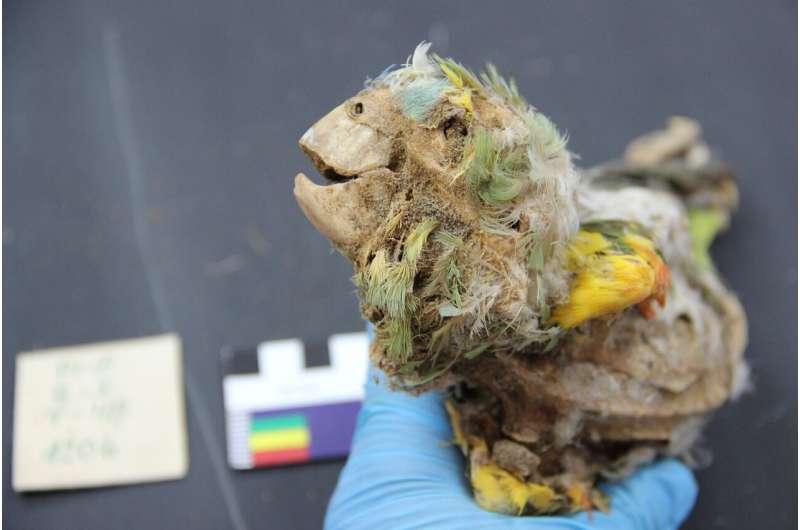 ატაკამის უდაბნოში აღმოჩენილი მუმიფიცირებული თუთიყუშები ისტორიის ბნელ მხარეზე მიუთითებს — #1tvმეცნიერება