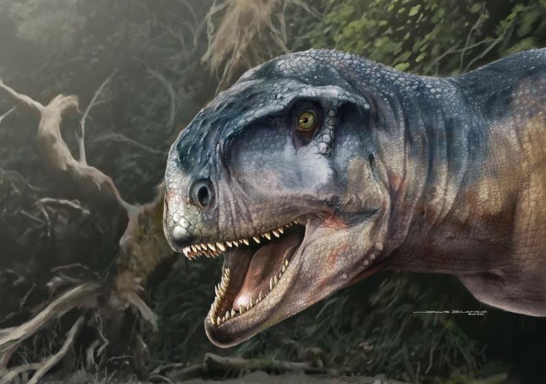 პატაგონიაში ახალი სახეობის მტაცებელი, ხორცისმჭამელი დინოზავრის ნამარხი აღმოაჩინეს — #1tvმეცნიერება